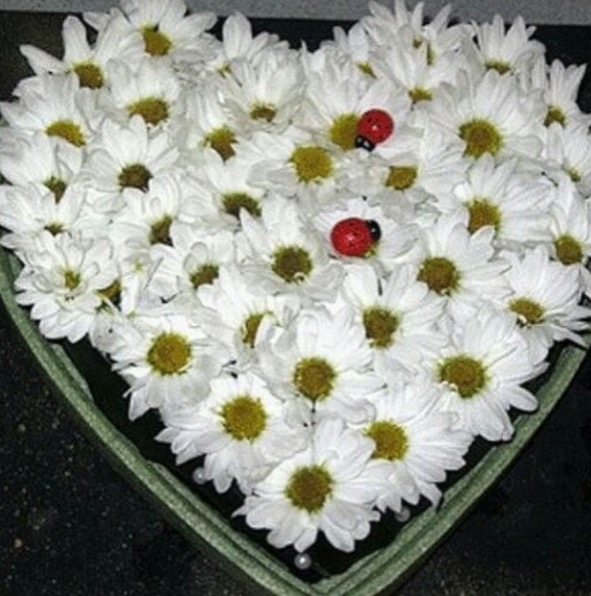 Хризантема кустовая (белый) — 9 шт., Пиафлор — 3 шт., Божья коровка декор — 2 шт., Коробка (сердце, средний) — 1 шт.