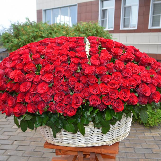 Роза Кения (красный) — 400 шт., Корзина для 500 роз (круг, большой) — 1 шт., Пиафлор — 16 шт.