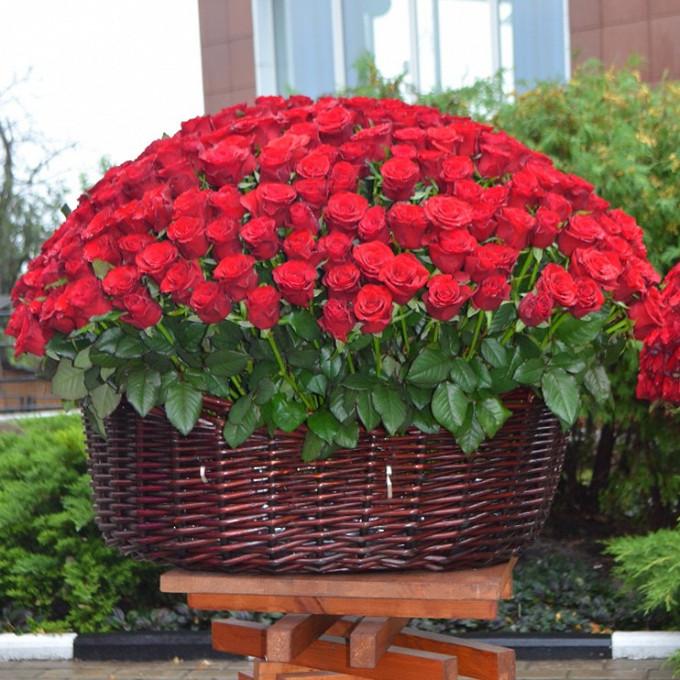 Роза Кения (красный) — 200 шт., Корзина для 300 роз (круг, большой) — 1 шт., Пиафлор — 14 шт.