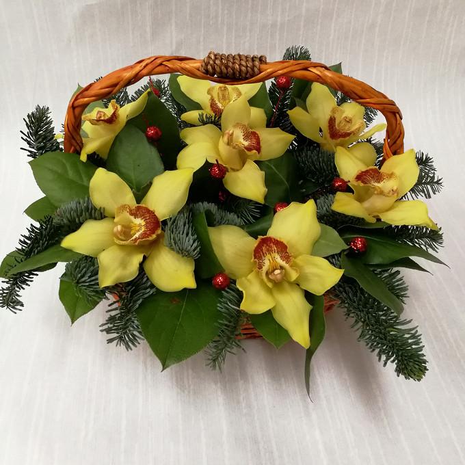 Жёлтая орхидея в корзине