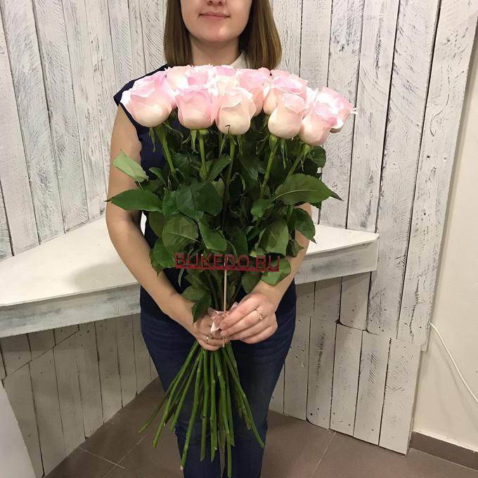 Роза Эквадор (нежно-розовый, 70 см) — 25 шт., Розовая лента — 1 шт.