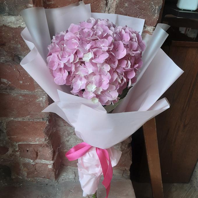 Нежно розовая гортензия