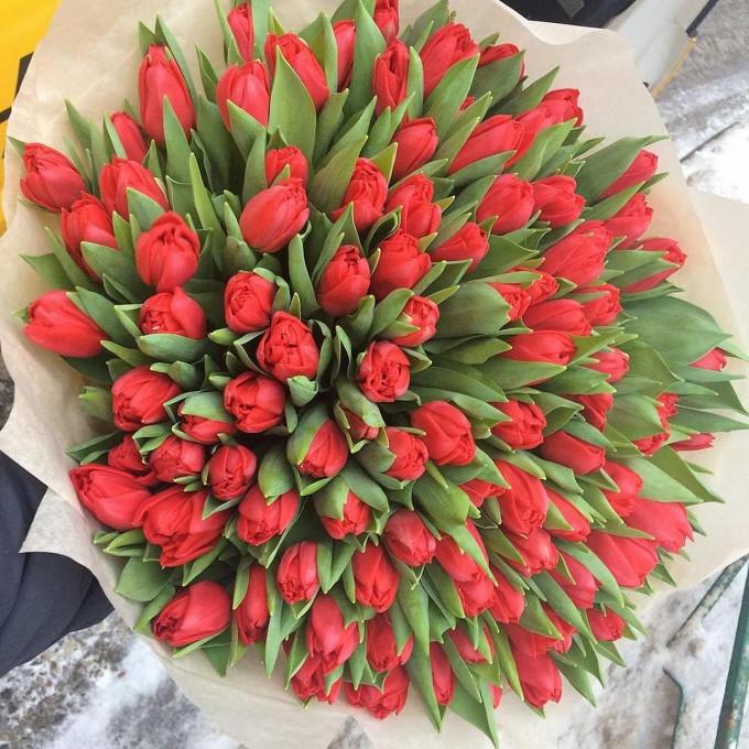 105 красных тюльпанов